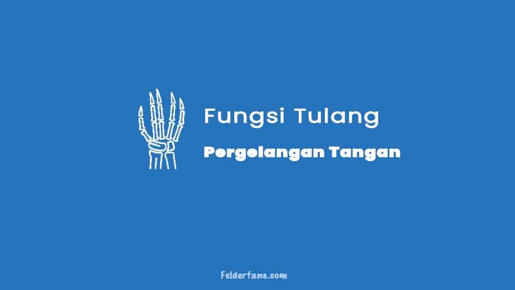 fungsi tulang pergelangan tangan